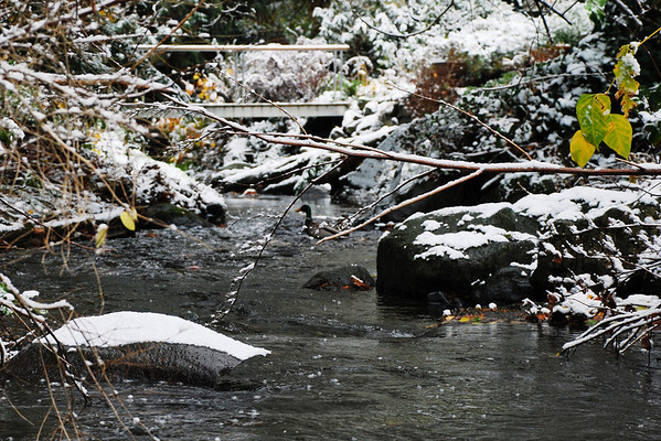 Snowmergency2010