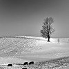 Morning graze study 3<br /> Allegan County, MI