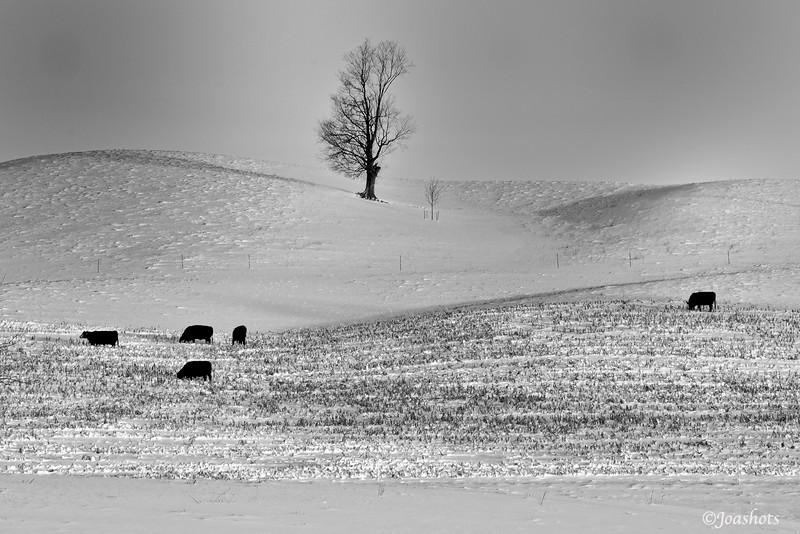 Morning graze study 2<br /> Allegan County, MI