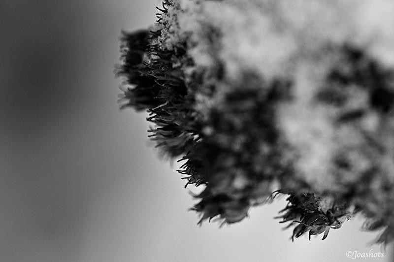 Icy tendrils<br /> Allegan County, MI
