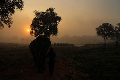 Sunrise in the Golden Triangle, Thailand A mahout guards an elephant. 17.2.2014 Canon EOS-M 18-55mm