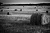 Hayfield near Davis, Oklahoma