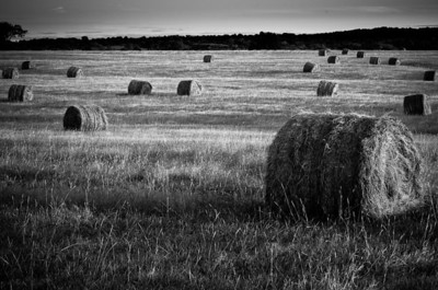 Hayfield near Davis, Oklahoma