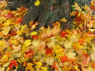 St. Mary's Park - October 2004
