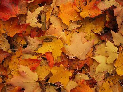 St. Mary's Park - October 2001