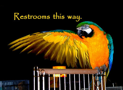 Restrooms this way