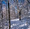 New snowfall 12/27/2012 Scio Township MI