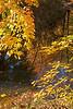 Fall colors in the stream by Bridgeway Lake, Scio Township MI 10/12/2012