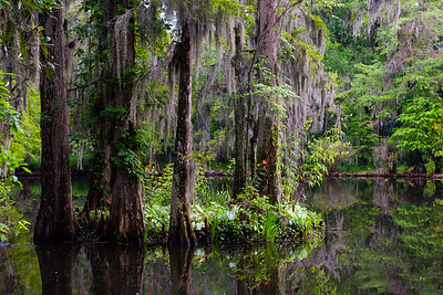 Magnolia Plantation, Carleston, South Carolina