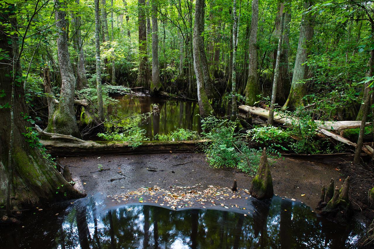 Four Holes Swamp, South Carolina