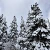 First Snow South Lake Tahoe 100