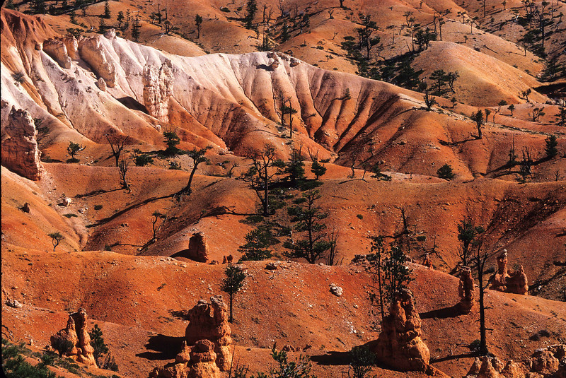 Surrealism at Bryce Canyon.<br /> Photo © Cindy Clark