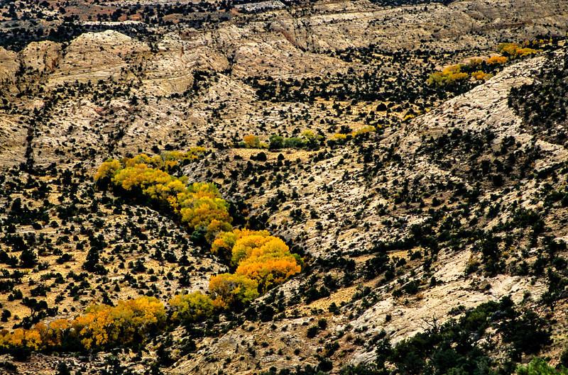 A stream of autumn color in the canyons near Escalante.<br /> Photo © Carl Clark