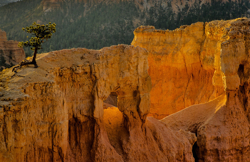 A lone tree holds up a ridge in Bryce Canyon.<br /> Photo © Carl Clark
