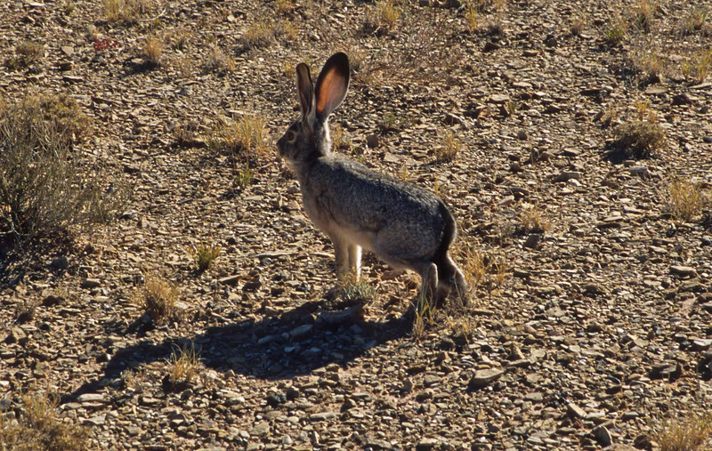 All ears - Capitol Reef.<br /> Photo © Carl Clark