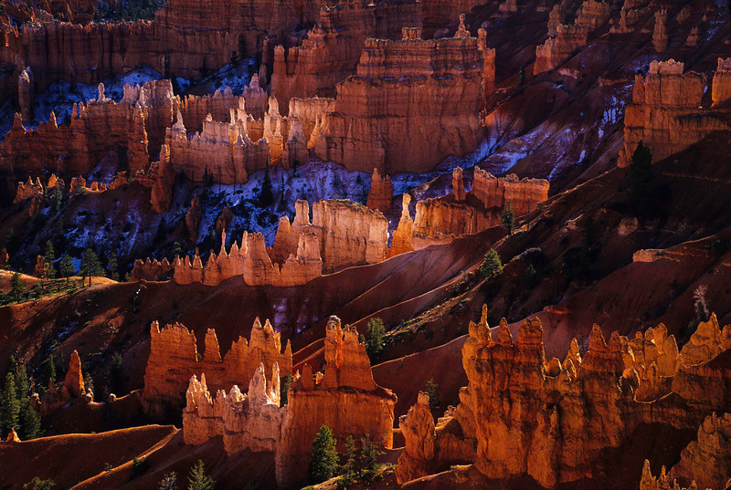 Like colored sugar - the towers at Bryce Canyon glow at sunrise.<br /> Photo © Cindy Clark
