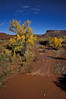 Indian Creek active after the rains - Canyonlands.<br /> Photo © Carl Clark