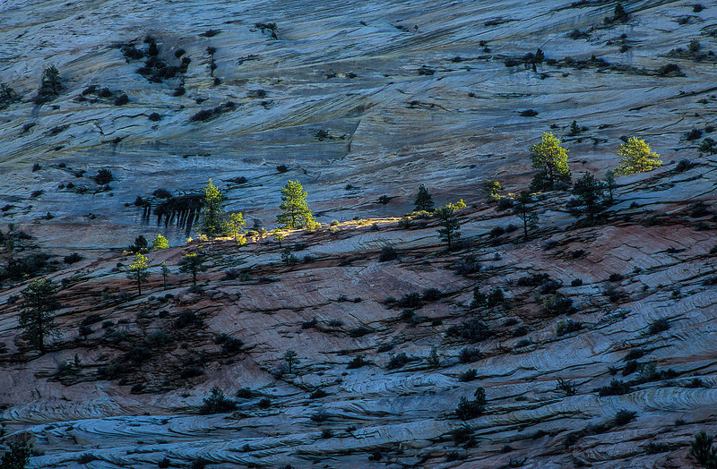A strip of foliage lit up in Zion.<br /> Photo © Carl Clark