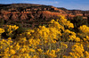 Rabbit brush flowers glow with morning sun at Butler Wash.<br /> Photo © Cindy Clark