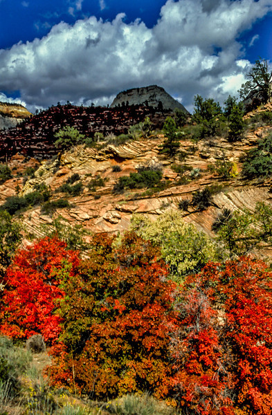 Understated autumn colors in Zion.<br /> Photo © Carl Clark