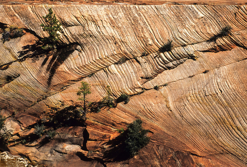 Sandstone layers at Zion National Park.<br /> Photo © Cindy Clark