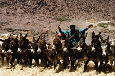Harvest Time-Morocco