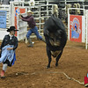Bullfighter Shane Esco South region finals Nov 1, 2013