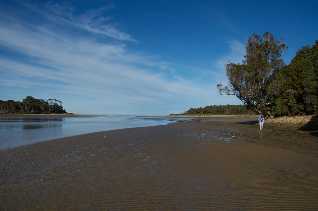 Native forest touches the sea at Tahakopa estuary, Papatowai, Catlins