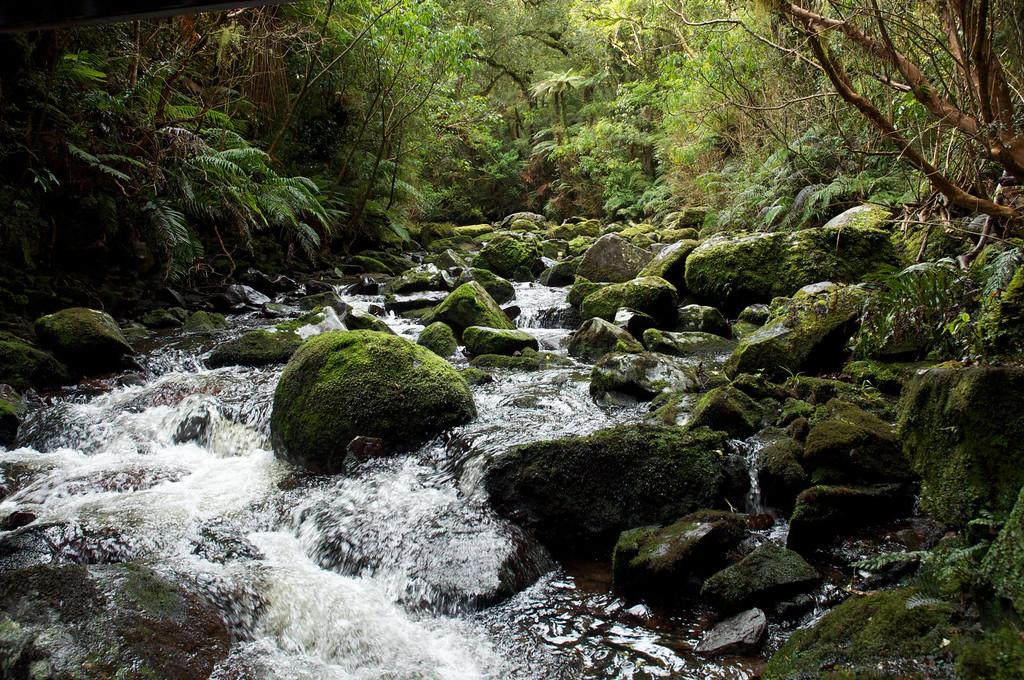 nr Maclean Falls, Catlins