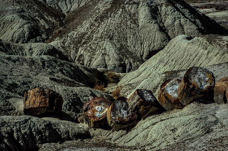 Chopped wood in the Petrified Forest.<br /> Photo © Carl Clark