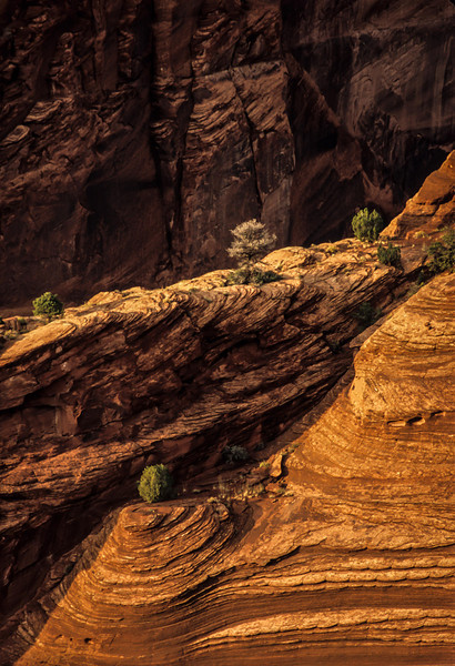 Foliage takes hold among the swirling layers of sandstone at Canyon de Chelly.<br /> Photo © Carl Clark