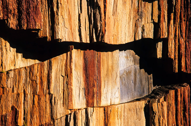 A close up at the Petrified Forest.<br /> Photo © Cindy Clark