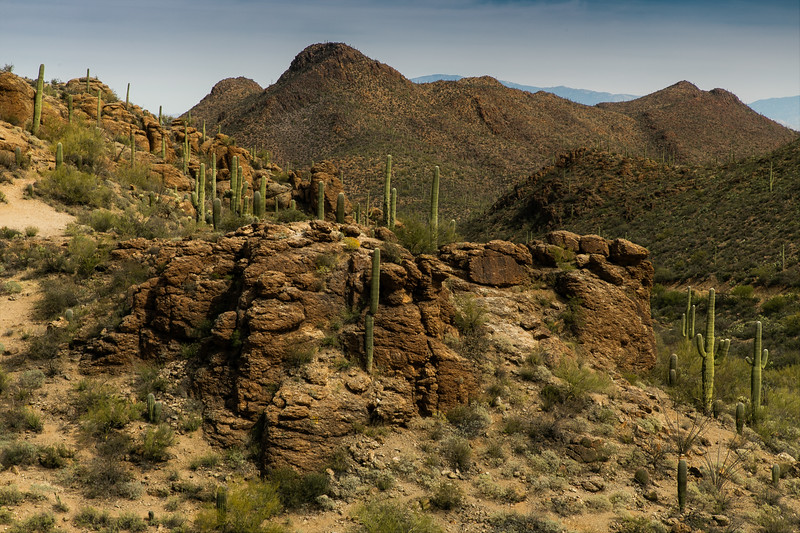Like a set in a western movie, Saguaro cactus and rugged rocks in Saguaro National Park, Arizona.<br /> Photo © Cindy Clark