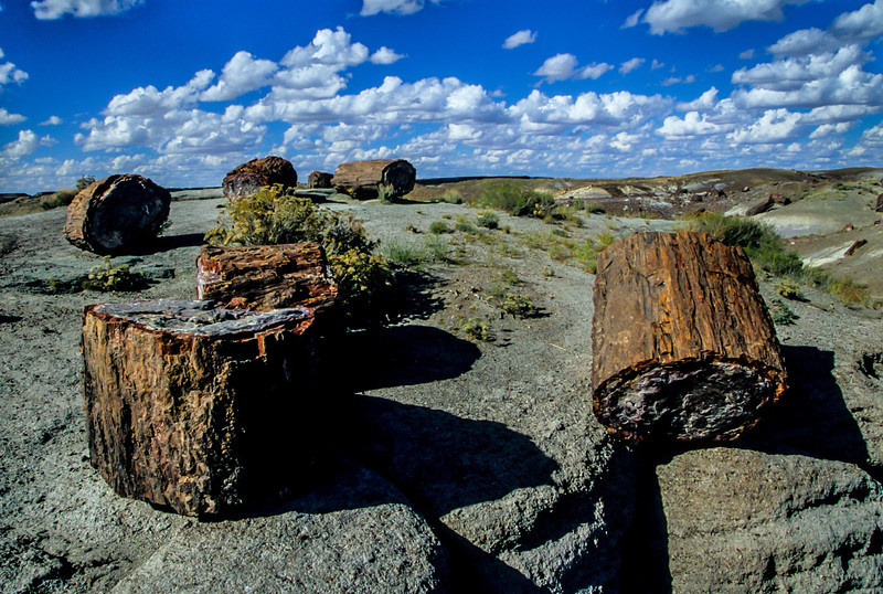 Old logs strewn about at the Petrified Forest.<br /> Photo © Carl Clark