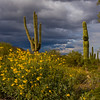 Storm over cactus and flowers DES103