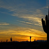 Saguaro Blue Sunset DES111