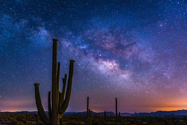 Night Blooms Under the Milky Way, Arizona Desert