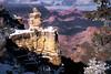 """Duck on a Rock"" - Grand Canyon National Park, Arizona"