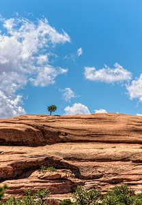 Solitary Tree at Arches National Park