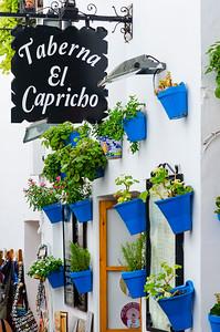 Capricho Blue Pots
