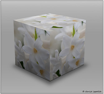 Hyacinth Cube