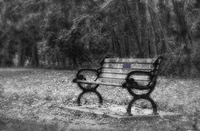 Park Bench in the rain