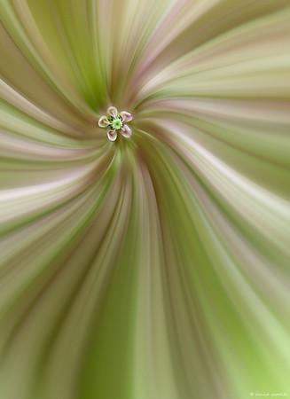 Zoom Twirl