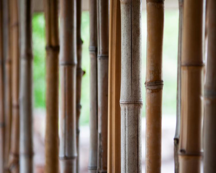 Bamboo fence - Zilker Botanical Garden, Austin, TX