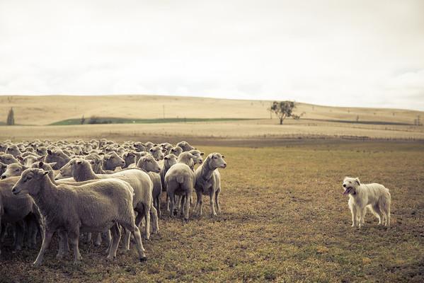 Keep The Flock