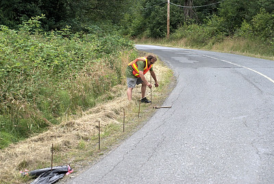 """Western Toad Rescue Project - Cowichan Station, BC, Canada Visit our blog """"A Cup of Toads"""" for the story behind the photo."""