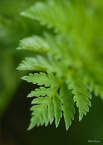 Looks like a fern, but I'm not sure what it is.  Probably just a green weed.