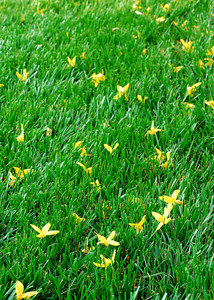 Green grass and fosythia blossoms.