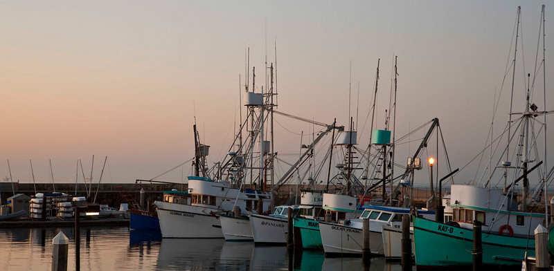 Fishing Fleet, Santa Barbara Harbor