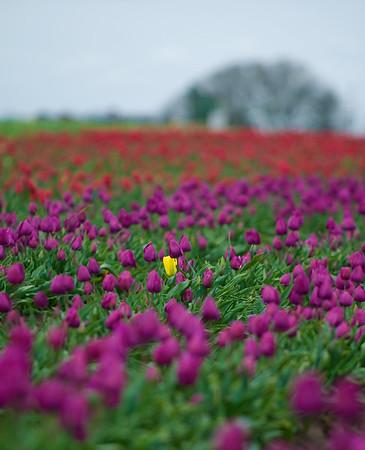 Spring Flowers 2010